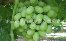 晚熟桃树苗施肥时需要留意哪些?最晚熟的桃树苗品种哪个最晚熟?