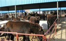 牧业的范围