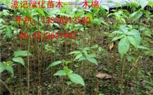 这棵叫什么树?最近那棵,广州苗圃基地有哪些?