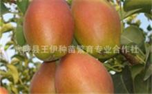 柚树可以嫁接在什么树上?文旦和柚子的区别是什么?