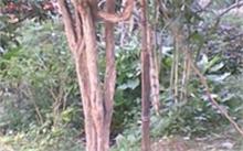 种植的按树好不好卖,请问林业局按树现在还可以种吗?