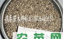 现代农业的发展重点是发展什么?中国农业发展历史