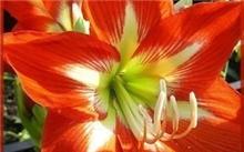 海棠花多久开,海棠花有什么寓意?