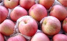 红富士苹果有什么食用价值?红富士苹果未来五年价格会好吗?