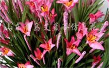 白鹤芋和马蹄莲是一种花吗!?