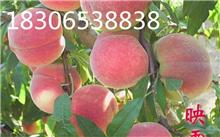 湖南能种植映霜红桃吗?