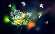 枇杷树要怎么管理?白枇杷苗种植技术