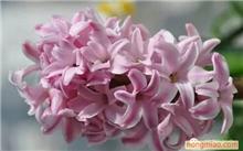 兰花小桃红冬季怎样养护?小桃红兰花怎么养?