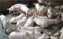 现代农业的发展趋势,中国未来农业有何发展