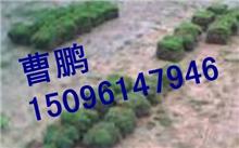 2013广东惠州草鱼价格走势分析
