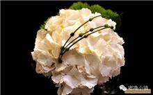 「水仙花语」水仙花花语是?水仙有哪些花语?