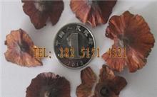 「铜钱草的养殖方法」铜钱草怎么才能养好?怎么养铜钱草?
