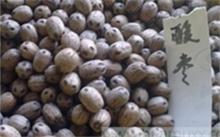 「酸枣的功效与作用」吃酸枣有什么好处和坏处?酸枣的功效与作用