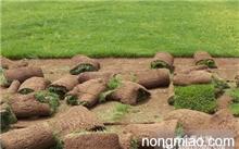 「马蹄金草」马蹄金是不是铜钱草?有人知道这个草叫什么名字吗??