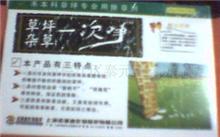 「油松育苗技术」油松苗怎样种植合理?油松的养殖、种植