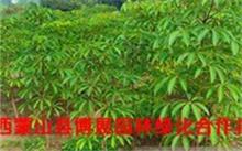 「木棉花的花语」有谁知道木棉花的花语是什么??木棉花的花语是?