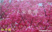 「芍药和牡丹的区别」牡丹花和芍药花具体有什么区别?芍药和牡丹有什么区别?