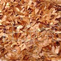 【苗圃直销】红油香椿种子 当年新采 保质保量 支持货到付款