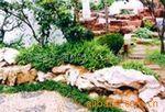 房地产园林绿化观赏竹子工程设计方案寻合作(图)
