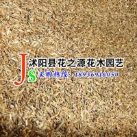 供应优质草本植物 蒲公英种子 当年新採 质量保证 实物图片