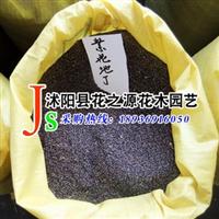 种业公司直销 紫花地丁种子 保值保量