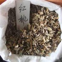 批发红枫种子 种子批发 进口种子 植物种子