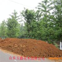 (26-27公分银杏树价格)