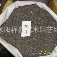 【厂家直销】紫花地丁种子  当年新采 保质保量  支持货到付款