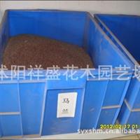 【厂家直销】 当年新采 马兰种子  保质保量  支持货到付款