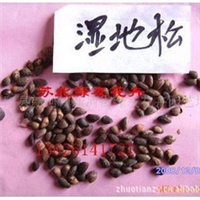 供应:湿地松松种子,侧柏种子,白皮松种子等