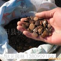 供应刺槐种子,紫穗槐种子,白玉兰种子,山玉兰种子