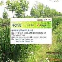 苗木-花木垂梅、红叶李、海棠、蜀桧、洒金柏、龙柏