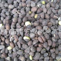 供应枇杷种子 枇杷籽