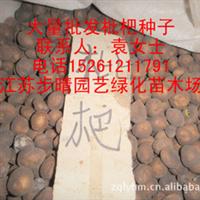 供应【枇杷种子】各种果树种子、林木种子