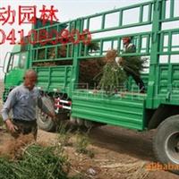 供应水蜡 东北水蜡 辽宁水腊 水腊报价 水腊2012年较新价格