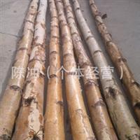供应装饰材料   白桦树  小区绿化 工程绿化