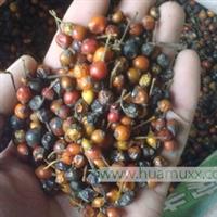 批发供应优质苗木种子 月季种子 藤本月季 当年新�� 质量保证