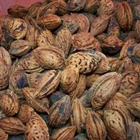 批发供应优质果树种子 桃树种子 毛桃种子 当年新��