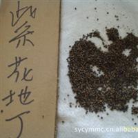 专业供应花木种子紫花地丁