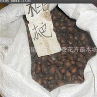 批发水果树种种子'枇杷种子'50元一斤,支持货到付款