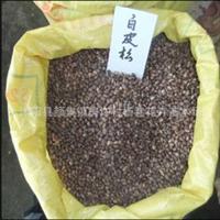 供应国家珍稀树种'白皮松种子'90元一斤,支持货到付款