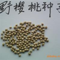 批发供应2012年度新采野生樱桃种子