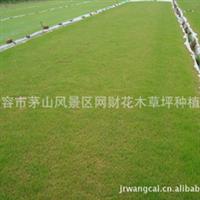 江苏草坪基地草皮价格优惠 工程绿化小区绿化厂区绿化