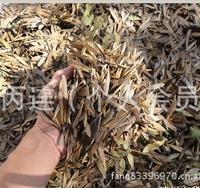 白蜡种子 26元一斤 青榔木种子|白荆树种子 当年新种子