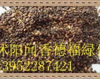 供应刚采收的黄柏种子   栾树种子等�v化种子