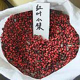 【红叶小檗种子】彩叶苗木花卉种子