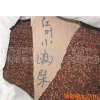供应绿化苗木花卉种子:红叶小檗种子