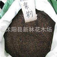 特价花木种子出售新采摘紫荆种子 紫荆花种子 100元/斤