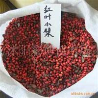 出售当年新采苗木种子,红叶小檗种子(净籽)