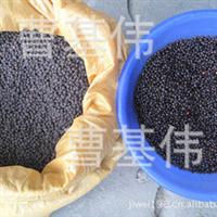 沙藏红豆杉种子/红豆杉种子价格/红豆杉种子